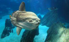 Na avstralsko obalo naplavilo čudno ribo