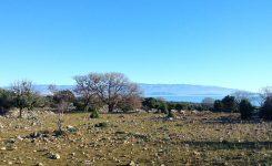 Otok Plavnik