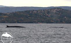 Brazdasta kita obiskala Tržaški zaliv