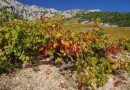 Otok Hvar – Vino s podpisom morja
