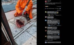 Ujeli zaščitenega morskega psa