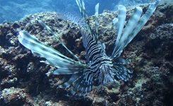 Tujerodne vrste v slo morju